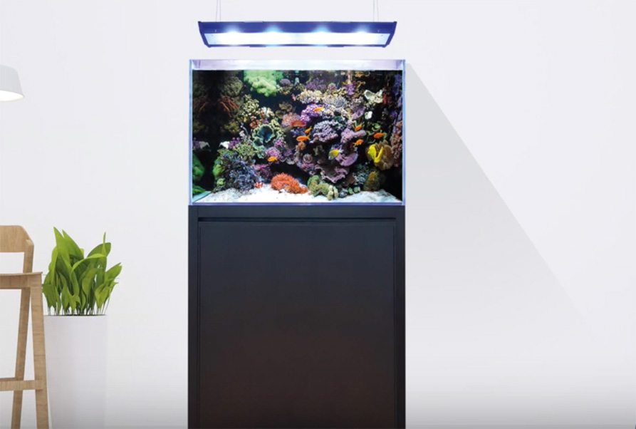Video Thumbnail of the Blue Marine Reef Series